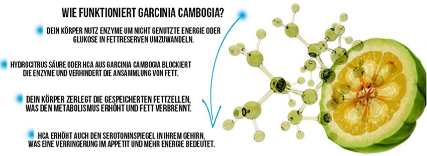 Wie funktioniert Garcinia Cambogia