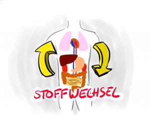 Stoffwechsel stärken